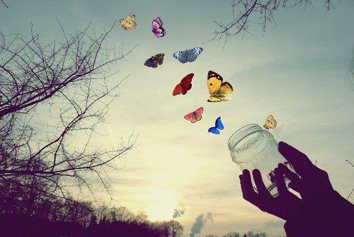 20170513-kikio327154-id125770-mariposas-libertad
